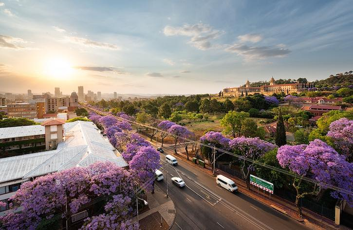 Pretoria Sunset Jacaranda Trees