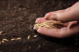 Sowing-seeds-460.jpg