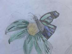 Nico Cao butterfly.jpg