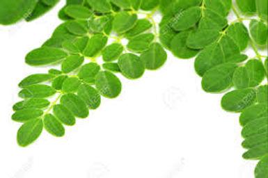 Moringa leaf.jpeg