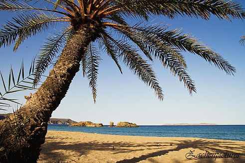 vai beach,vai palm forest,apartments palekastro vai,sitia holidays,sitia apartments,crete vai,
