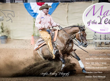 2016 Mare Of The Year Awards