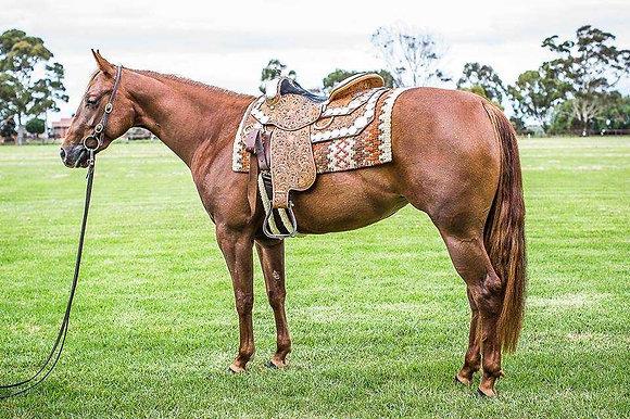 Phil Harris Show Saddle