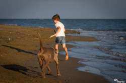 La Casa di Giò - dog and boy
