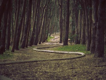 Take the Winding Path