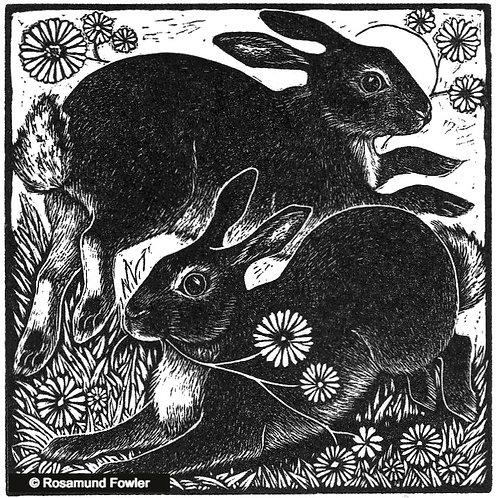 Spring Rabbits