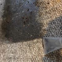 Spot Cleaning Orwell Carpet Care