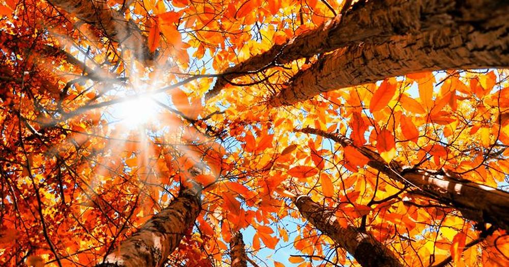 Fall-Leaves-4-