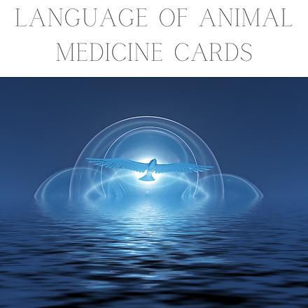 Animal Medicine Card Reading