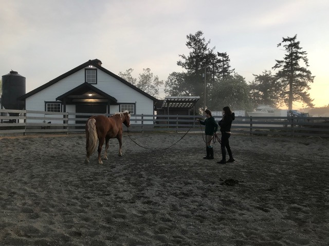 Roundpen and North Barn