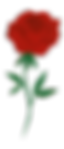 rose no background.png
