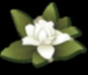 illustration-magnolia.png