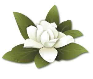 illustration-magnolia.png