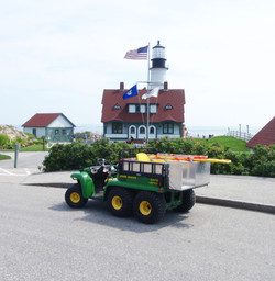 Gators at the lighthouse