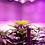 Thumbnail: Hot-selling indoor hydroponic full spectrum cob led grow light