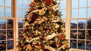 Qual é a Origem e o significado da árvore de Natal?