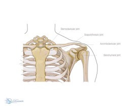 Scapula Stabilization & Movement