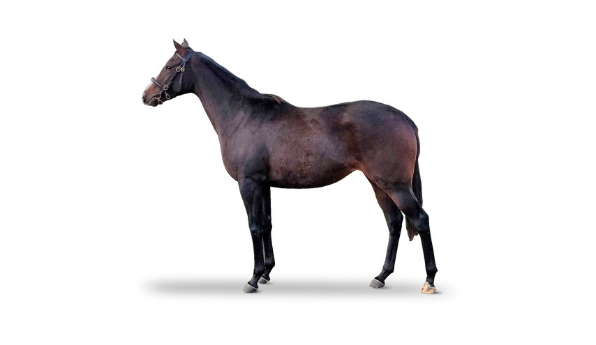new_bay_filly.png