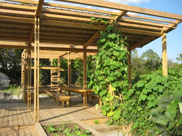 Archiable_Blossom_Community_Garden_2.jpg