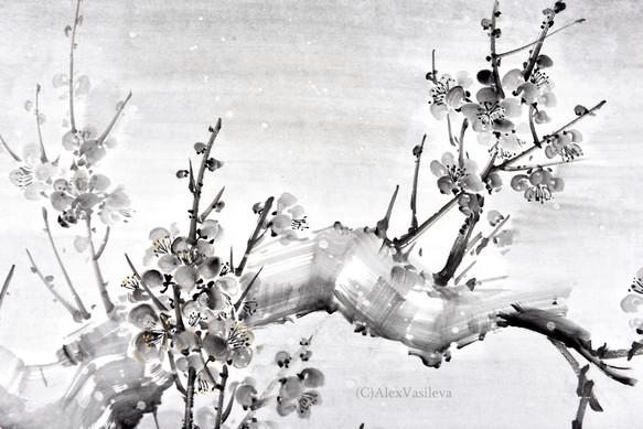 Ветка цветущей сливы под снегом, фрагмент