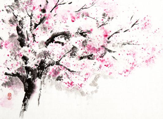 Дерево сакуры в цвету 30*40