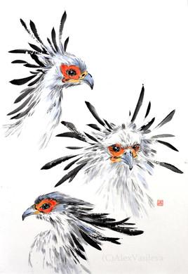 Птица секретарь. Из зарисовок в Московском зоопарке 31*47