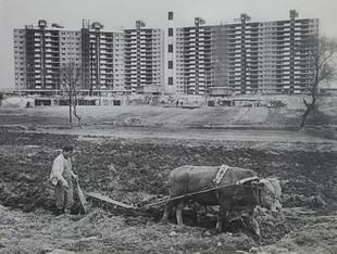 60년대강남