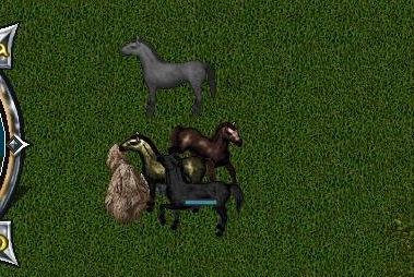 Wild Horses.jpg
