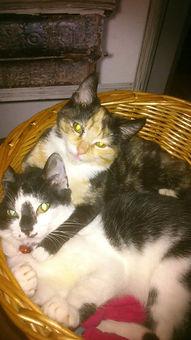 Cats in basket.jpg