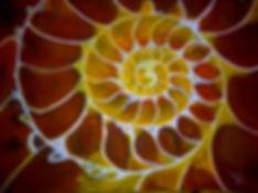 Inside the shell.jpg