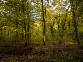 La forêt de la Londe-Rouvray et le village troglodyte