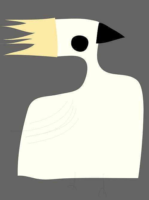 Peter Bainbridge: Cockatoo