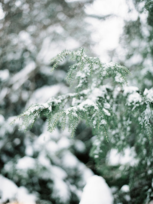 Gary White: Winter's First Snow