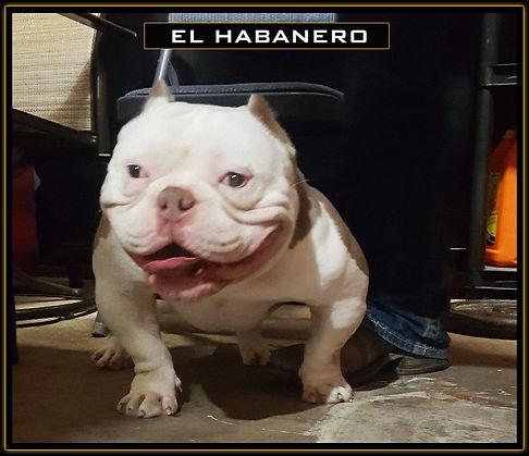 El_Habanero2.jpg