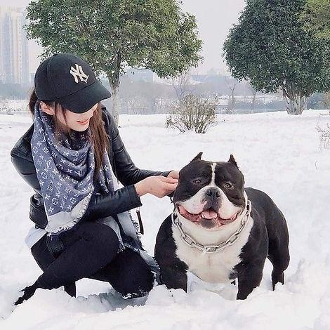 bully_puppies_2.jpg
