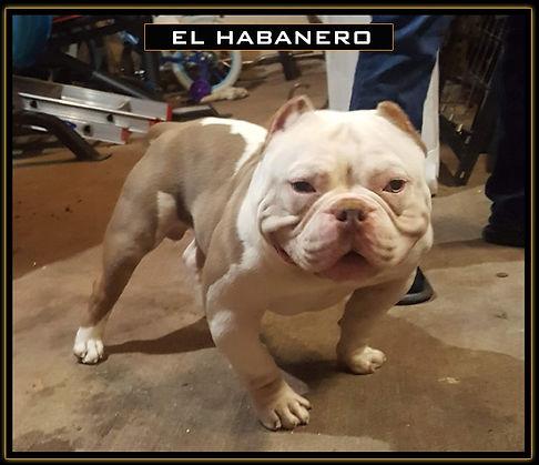 El_Habanero1.jpg