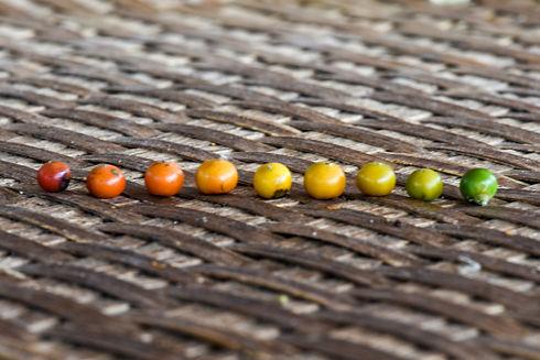 pfefferkörner farbe