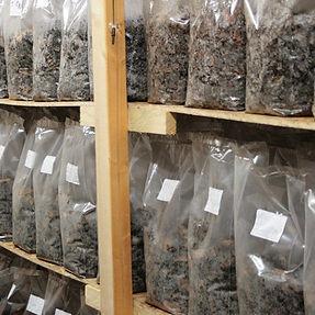 Mushroom-Incubation-Room-1024x576.jpg