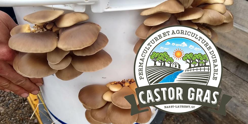 *Formation* Culture de champignon