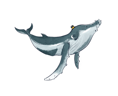 aimhi%20whale_edited.png