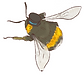 AimHi_Bee_Interactivity.png