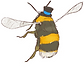 AimHi_Bee_Resources.png