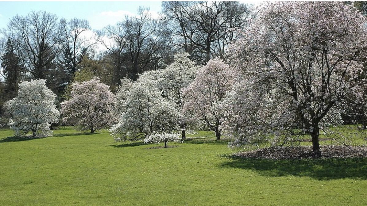 Westpelaer arboretum and garden