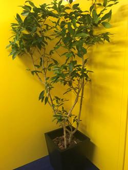 12月の観葉植物①