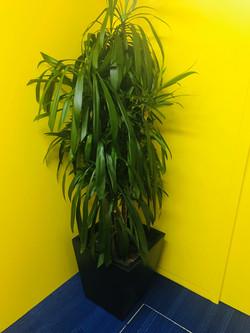 2020年1月の観葉植物①