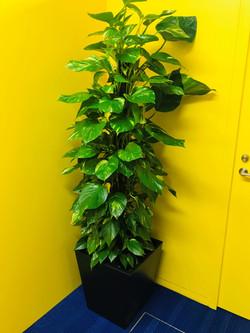 11月の観葉植物①
