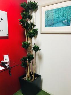 12月の観葉植物②