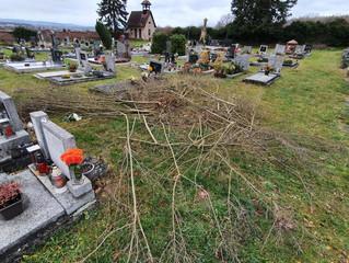 Větve na hřbitově