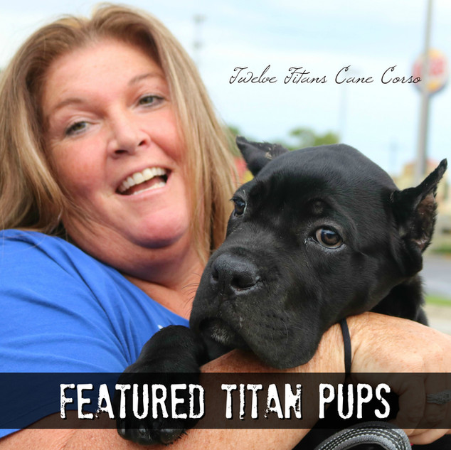 FEATURED TITAN PUPS