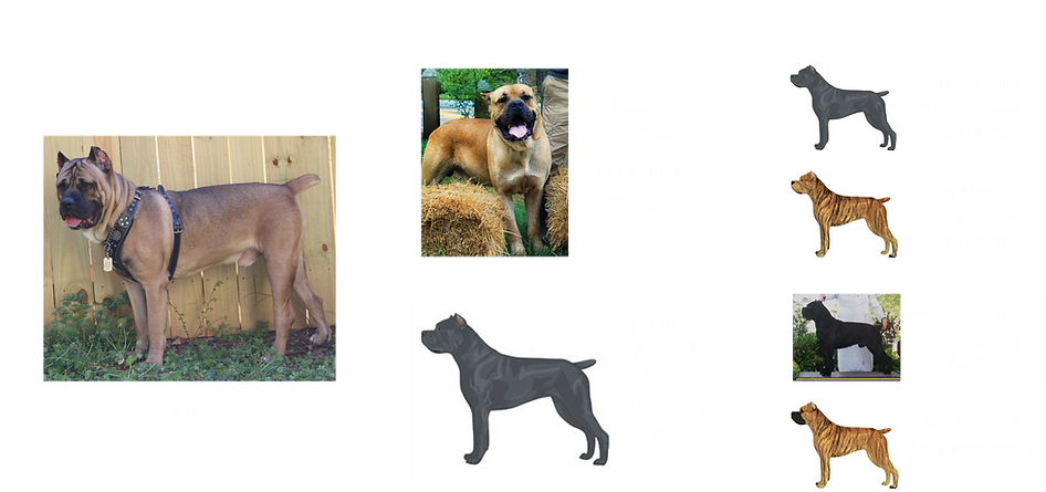 Atlas-Pedigree-1.png